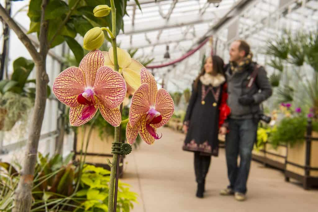Denver-Botanic-orchids