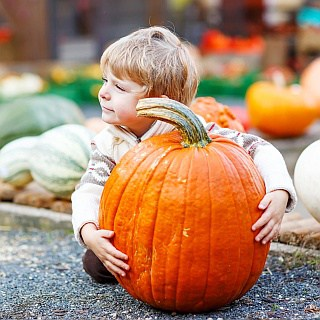 Check out our list of corn mazes & pumpkin patches